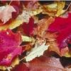 Vysavač na listí